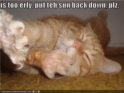 asking caption captioned cat early please sleeping sun upset waking up - 4006293760