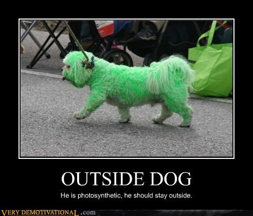 OUTSIDE DOG He is photosynthetic, he should stay outside.