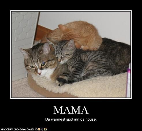 caption captioned cat cuddling kitten mama warmest spot in the house warmth - 4006540032