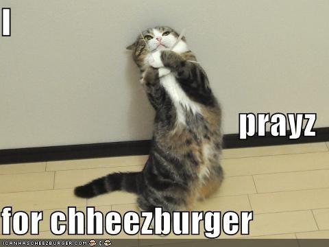 Cheezburger Image 4006891008