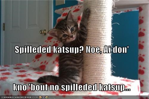 caption,captioned,cat,evidence,ignorance,ketchup,kitten,lie,lying,marks,paw prints,red,spilled