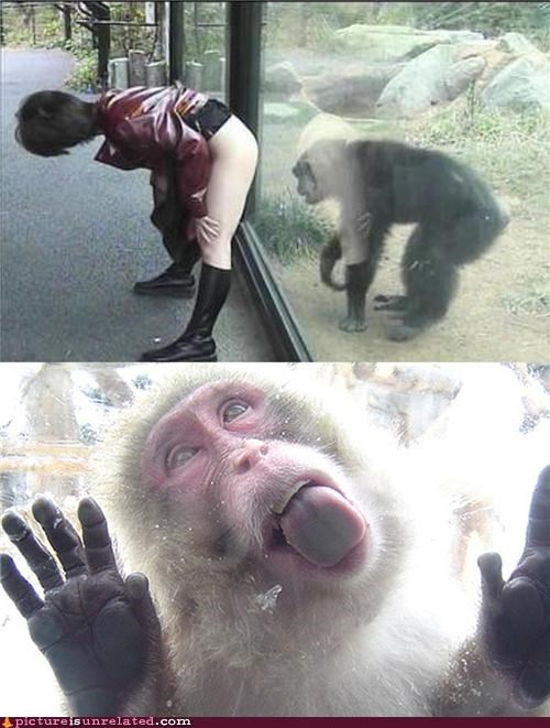 creepy,glass,monkey,perv,tongues,woman,wtf