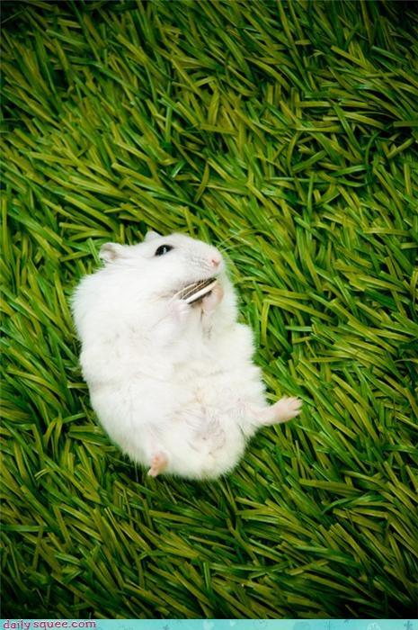 hamster noms summer - 4008840704