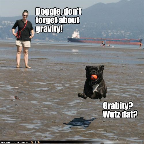 ball,beach,catching,fetch,Gravity,hoverdog,hovering,jumping,mixed breed,pug