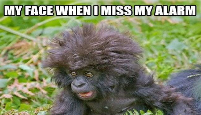 funny monkeys and monkey memes | MY FACE IMISS MY ALARM FunnyOnlinePictures.com