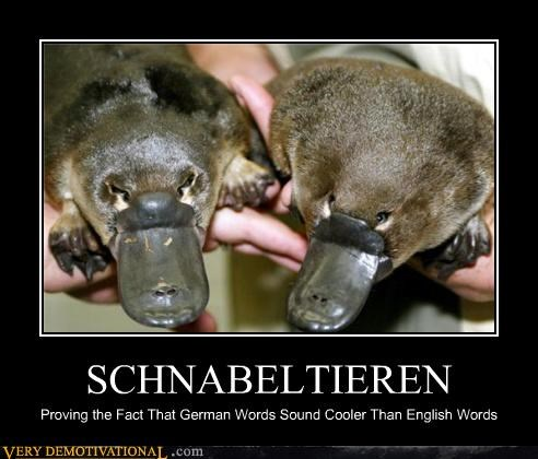 wtf german english words funny - 4010101504