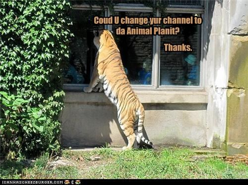 animal planet caption captioned change the channel please question television thanks tiger - 4010251776