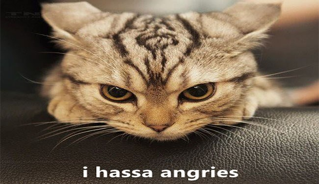 a funny list of lolcats memes