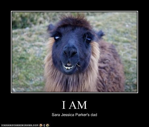 alpachurr Celebriderp Father llama sarah jessica parker sex and the city - 4010521344