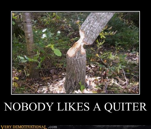 chopping,quitter,tree,funny
