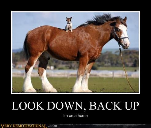 awesome dogs funny horse - 4011156480
