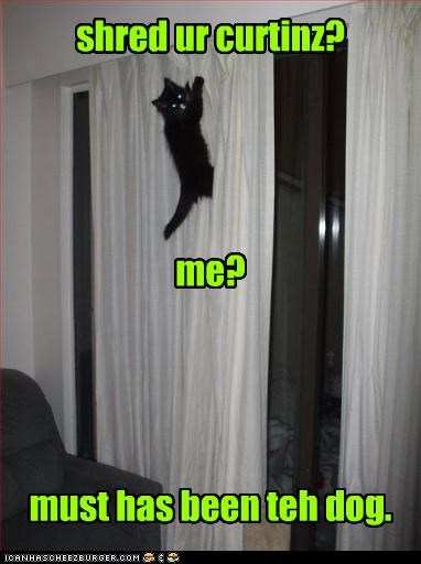 blame caption captioned cat climbing curtains didnt-do-it dogs kitten passing the blame shred someone else - 4011241728