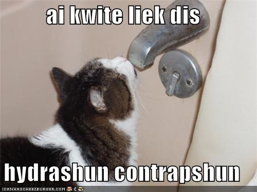 approve,caption,captioned,cat,contraption,do want,drinking,faucet,hydration,quite like