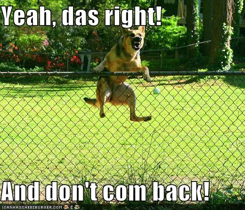 confident dont-come-back fence german shepherd guard dog shouting understanding