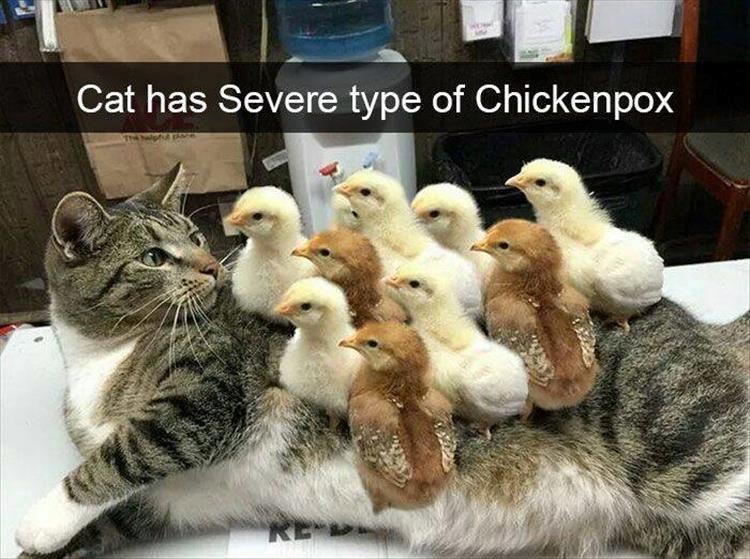 funny caturday memes