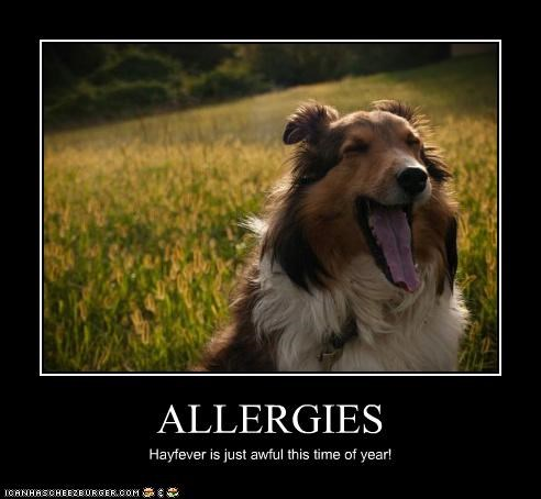 ALLERGIES Hayfever is just awful this time of year!