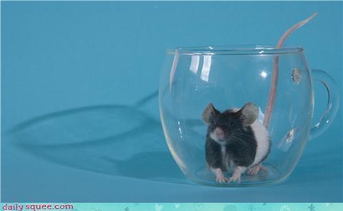 cute,lemonade,rat