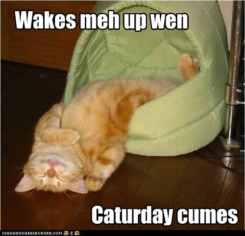 caption captioned cat Caturday cute laying down sleeping sprawled out time frame wake me up