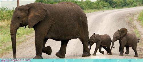 baby,elephant,mama