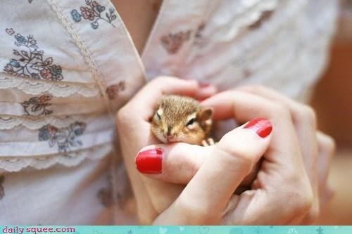 baby chipmunk cute - 4011787008