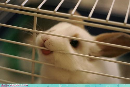bunny face tongue - 4011790592