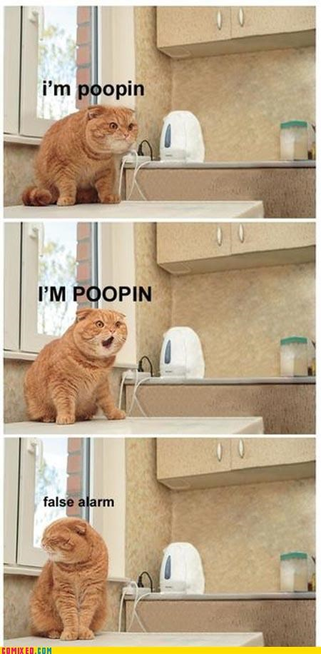 animals Cats classic false alarm lol pooping