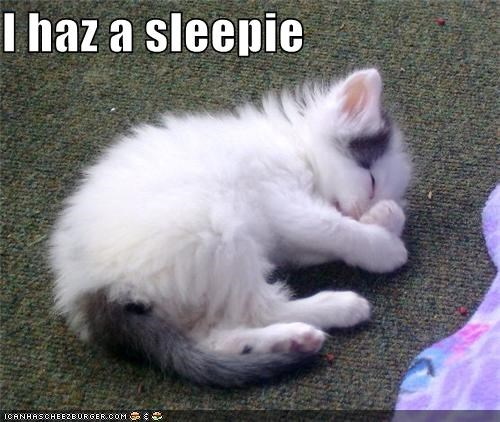 caption captioned curled up cute i has kitten lying down sleepie sleeping - 4011833344