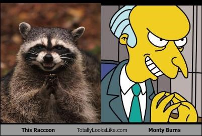 cartoons,monty burns,raccoon,the simpsons