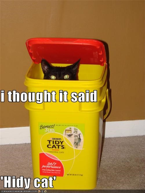 caption captioned cat error hiding hidy cat misread mistake oops tidy cat - 4011933184