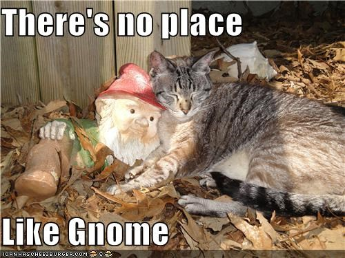 adage caption captioned cat cuddling lawn gnome no place like home pun - 4012028416