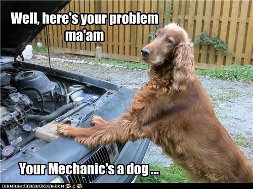 car,examining,found it,mechanic,mixed breed,problem,stating the obvious
