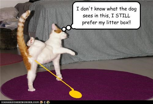 I don't know what the dog sees in this, I STILL prefer my litter box!! ( ________