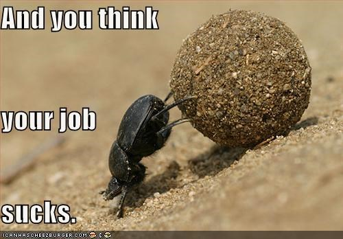 and you think,bad job,caption,captioned,dung,dung beetle,job,sucks,terrible
