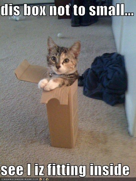 box,caption,captioned,cat,fits,fitting,inside,not too small,not true