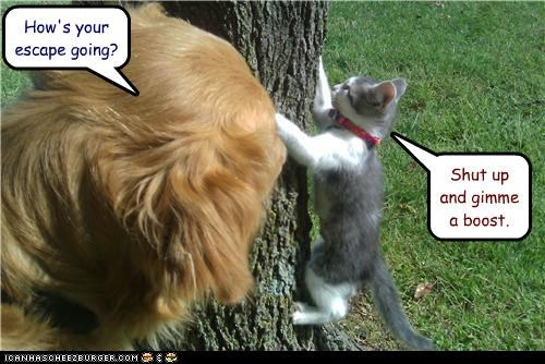 a boost,caption,captioned,cat,dogs,escape,gimme,harrassment,help,hows-it-going,question,shut up