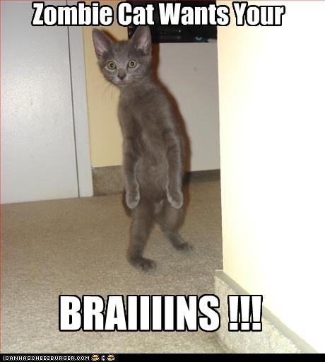 Zombie Cat Wants Your BRAIIIINS !!!