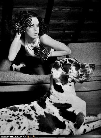 black and while,dalmatian,drama,dramatic,face,facial expression,human,model,modeling,posing