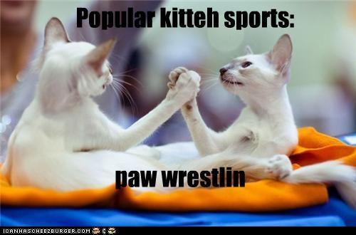 Popular kitteh sports: paw wrestlin