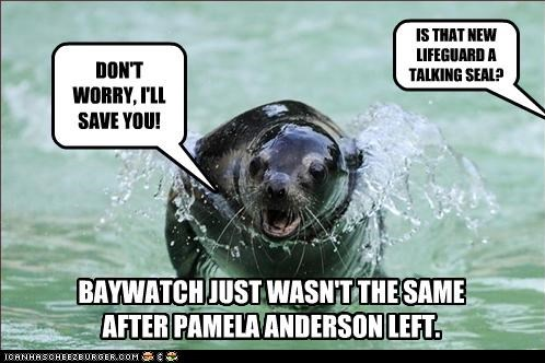 DON'T WORRY, I'LL SAVE YOU! IS THAT NEW LIFEGUARD A TALKING SEAL? BAYWATCH JUST WASN'T THE SAME AFTER PAMELA ANDERSON LEFT.