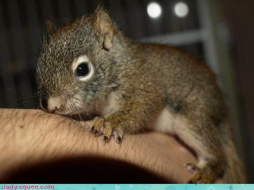 baby,red,squirrel