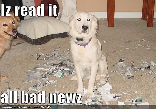 destruction mess newspaper read reading whatbreed - 4015181312