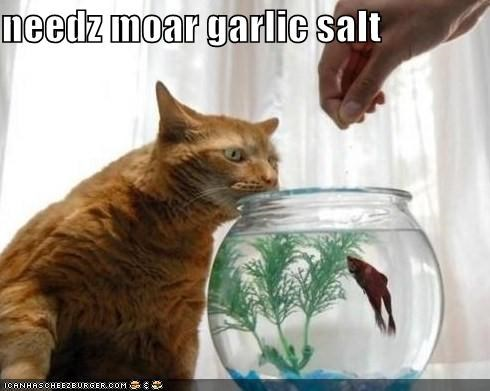 caption captioned cat cooking fish garlic salt ingredients needs more spices taste testing - 4015204608