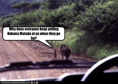 caption captioned dont-understand hakuna matata meerkat no worries Pumba question the lion king timon warthog why