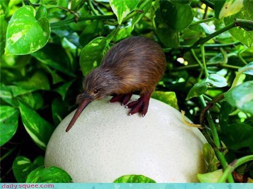 baby bird egg kiwi puns - 4016103936