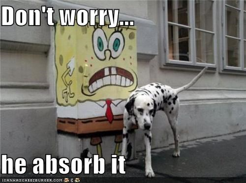 absorb,afraid,dalmatian,dont worry,Hall of Fame,peeing,sponge,SpongeBob SquarePants
