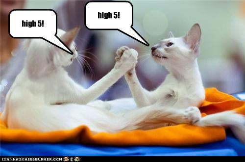 high 5! high 5!