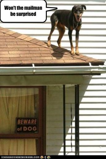 attack,doberman pinscher,evil,hiding,mailman,question,rooftop,standing,surprised,waiting