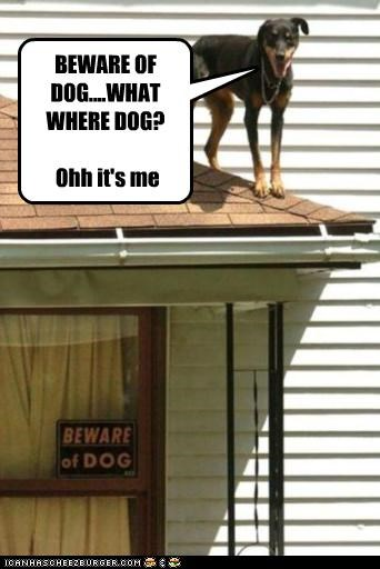 BEWARE OF DOG....WHAT WHERE DOG? Ohh it's me
