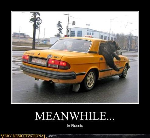bears cars hilarious Meanwhile modern living russia taxi transportation - 4018268928