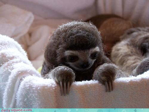 Inception,nerd jokes,sleepy,sloth